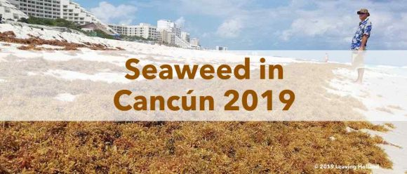 Seaweed Cancún, 2019, update, sargassum, hotel zone, all inclusice, holiday, status, is there seaweed in cancun, Playa del Carmen, Rivierea maya