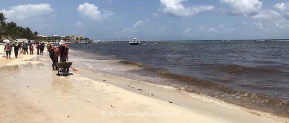 sargasso 2020 Quintana Roo