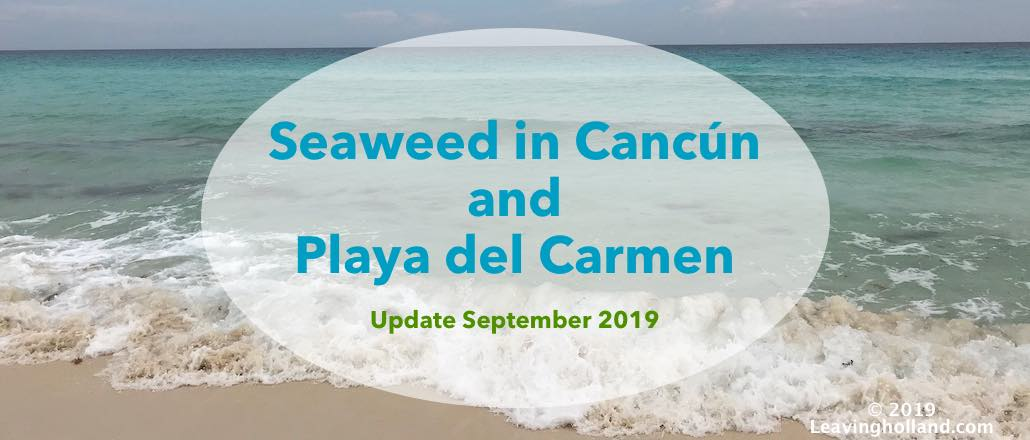 seaweedproblem cancun update